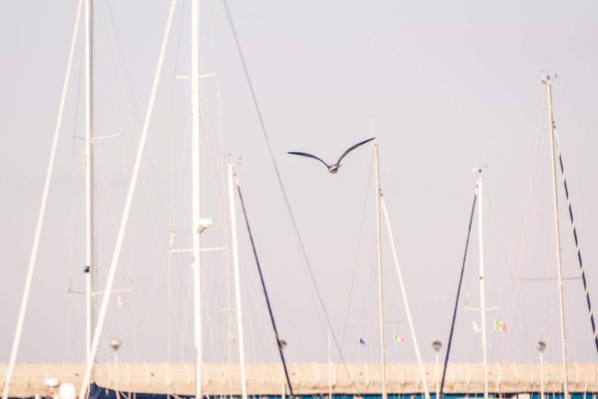 Marina dei Cesari 42